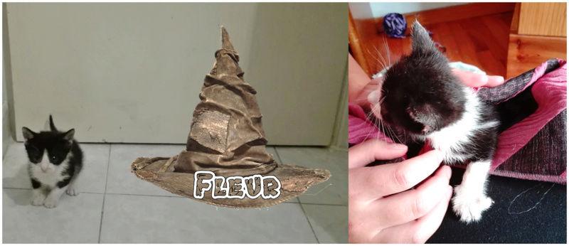 Γατούνια από το Hogwarts περιμένουν τους μάγους τους!  Fleur_10