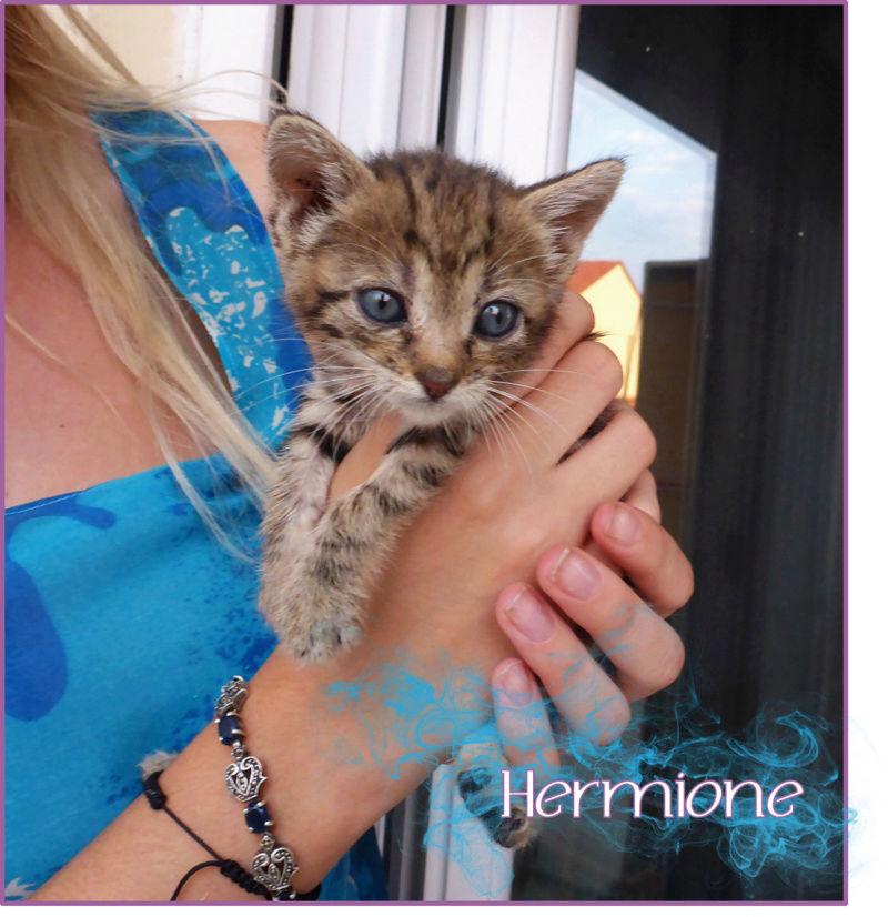 Γατούνια από το Hogwarts περιμένουν τους μάγους τους!  Hermio11