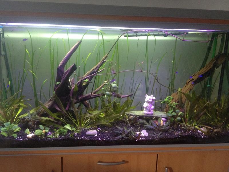 mon nouveau aquarium Img_2510