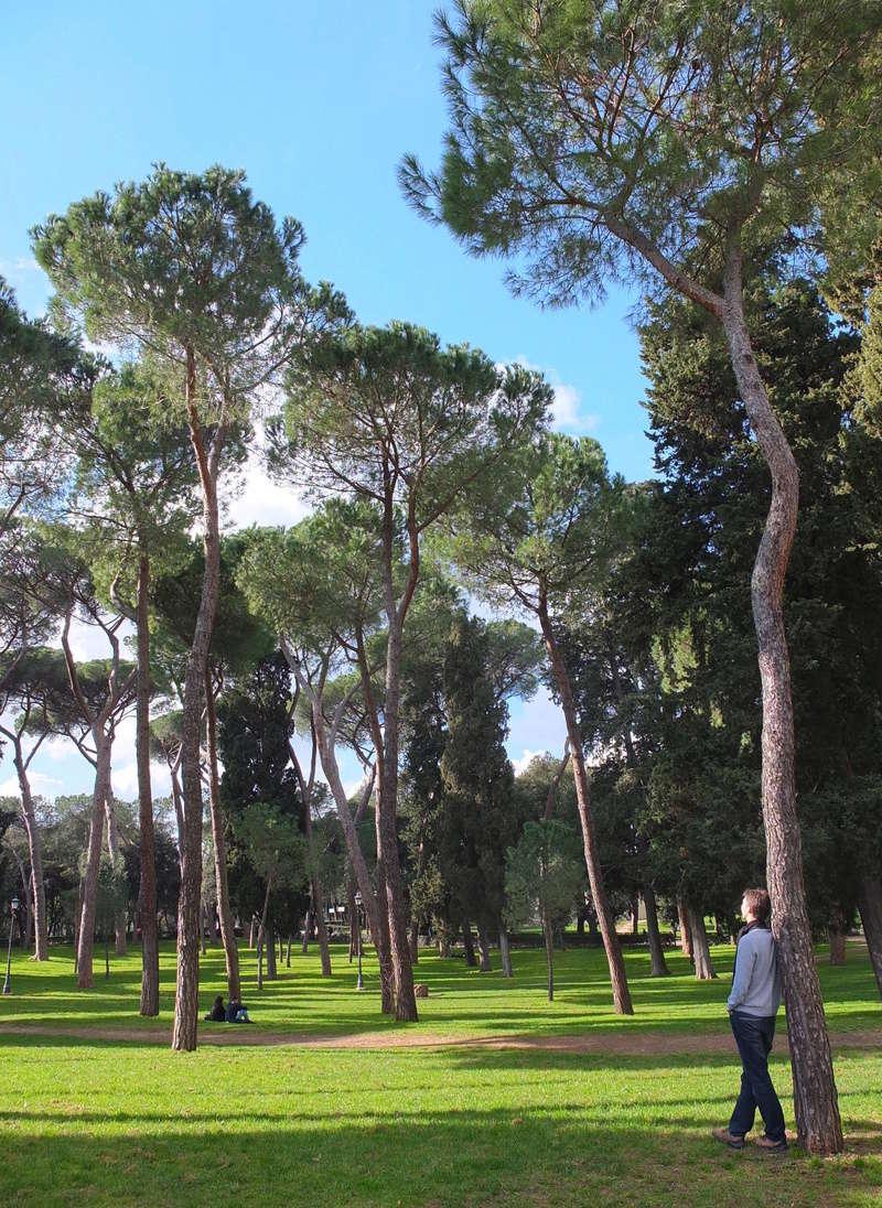 Trees and Lake Adosse11