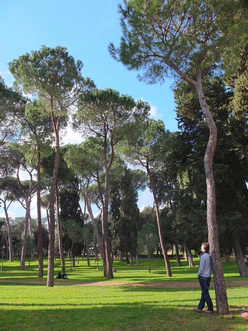 Trees and Lake Adosse12