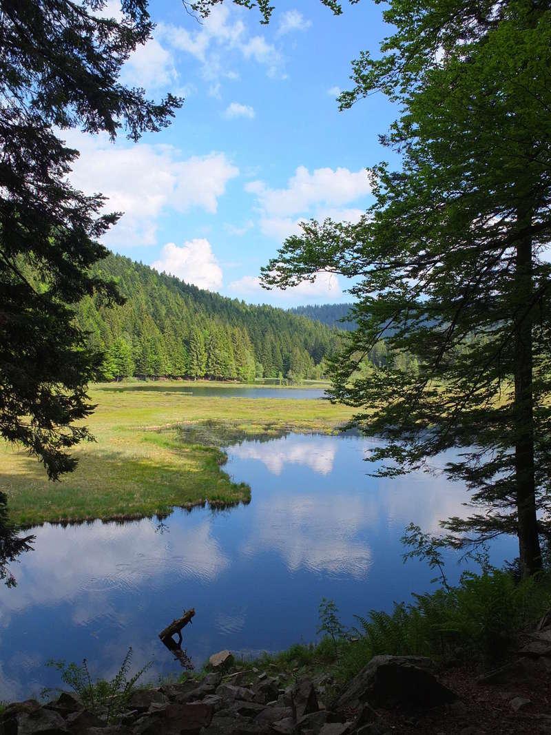 Trees and Lake Lacvos10