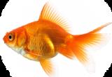 قسم الأسماك المنزلية