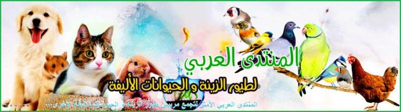 المنتدى العربي لطيور الزينة و الحيوانات الأليفة