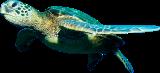 قسم الحيوانات المائية الأليفة