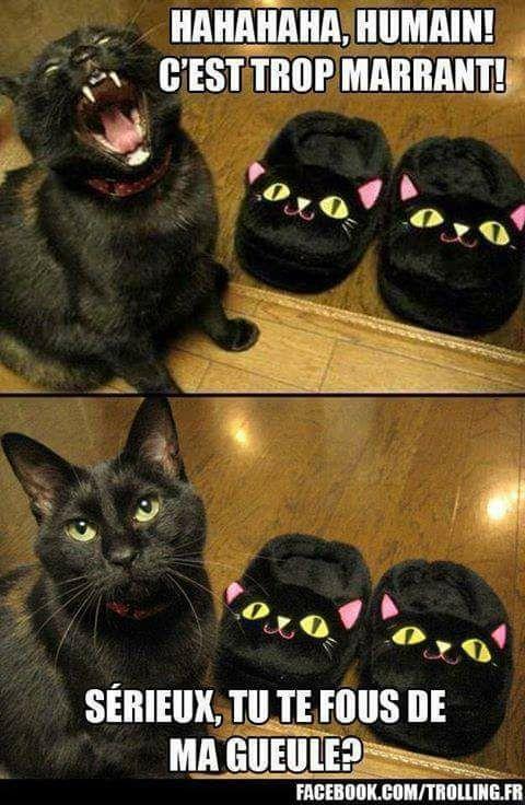 Images du jour sur les chats - Page 23 20526210