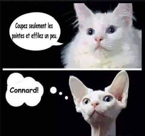 Images du jour sur les chats - Page 23 Chat-c10