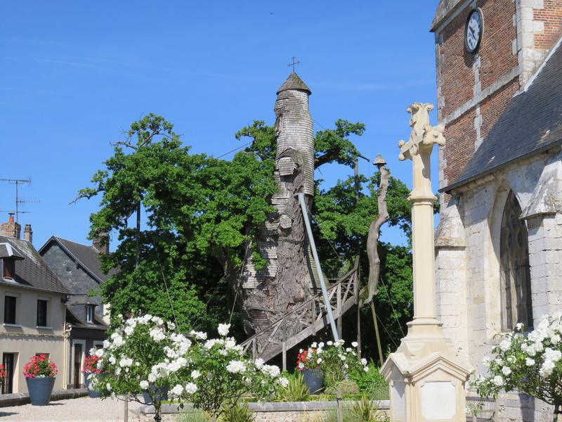 Le Chêne d'Allouville 0211