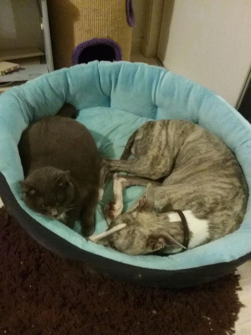 chat... et lévrier Lancel12