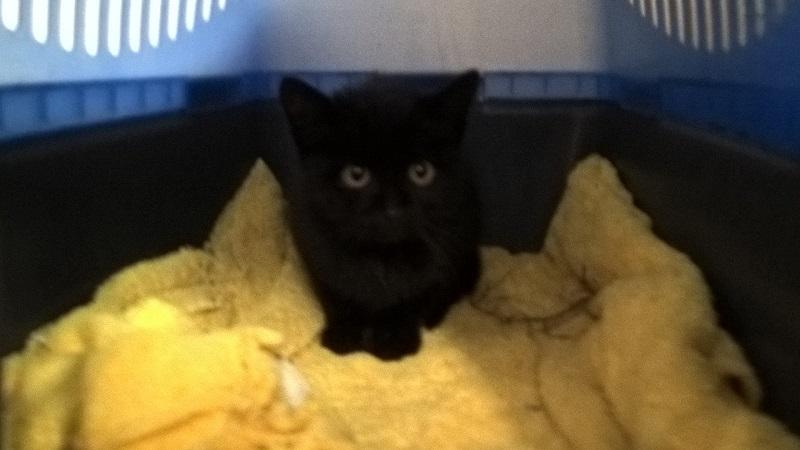 SOS pour un nouveau chat abandonné qui a trouvé une nouvelle famille Wp_20120