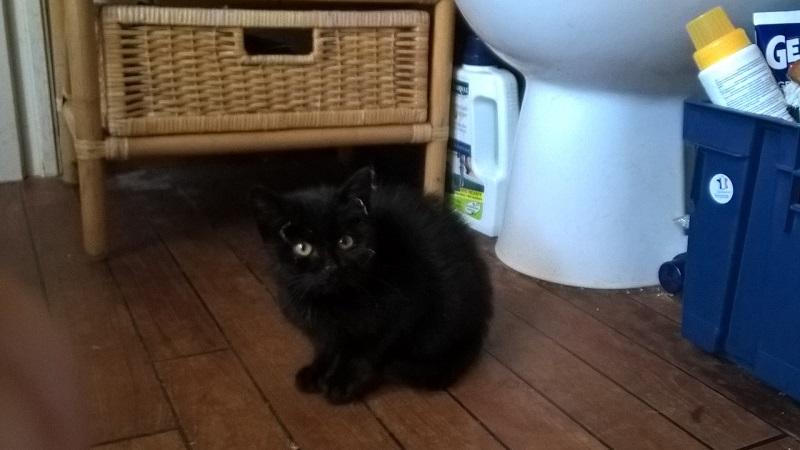 SOS pour un nouveau chat abandonné qui a trouvé une nouvelle famille Wp_20121