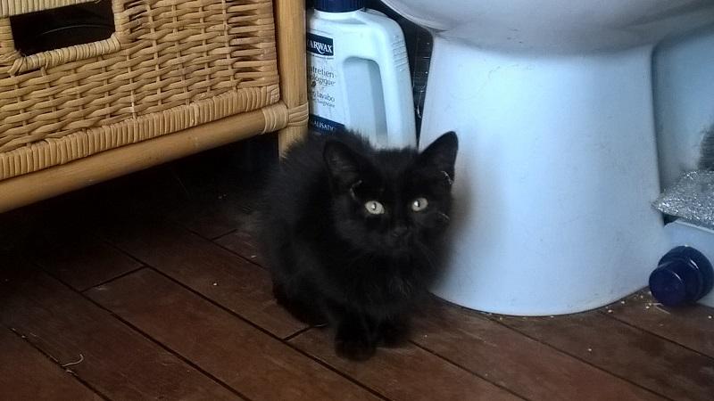 SOS pour un nouveau chat abandonné qui a trouvé une nouvelle famille Wp_20122
