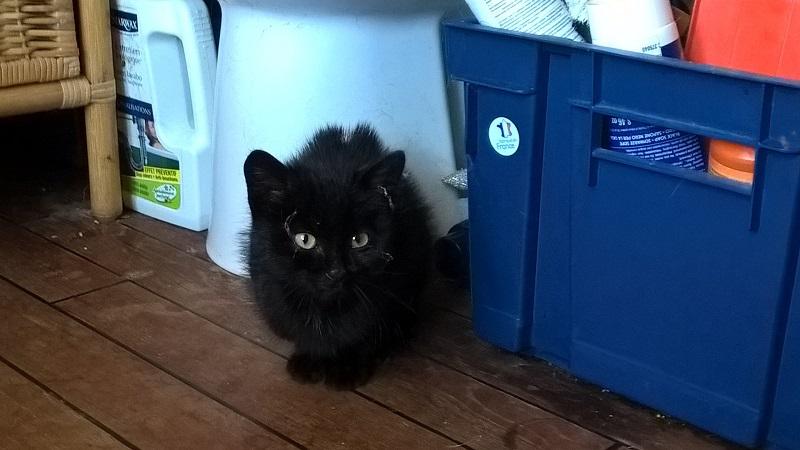 SOS pour un nouveau chat abandonné qui a trouvé une nouvelle famille Wp_20123