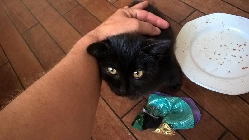 SOS pour un nouveau chat abandonné qui a trouvé une nouvelle famille Wp_20124
