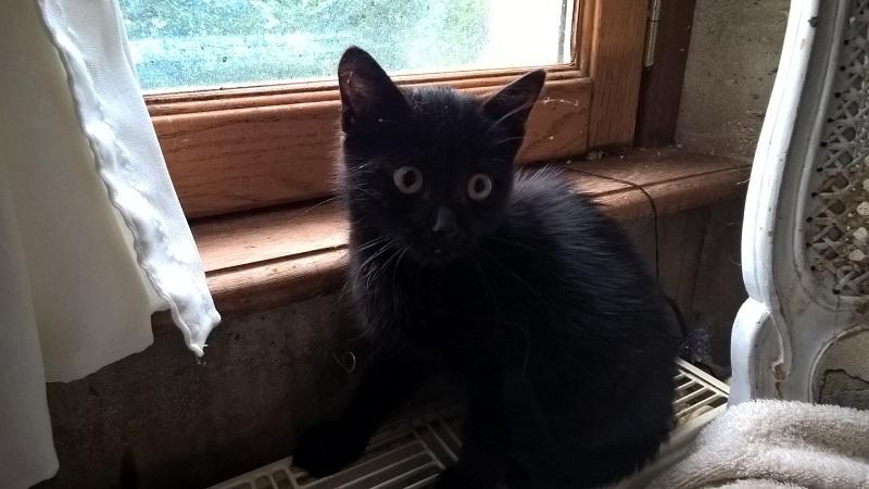 SOS pour un nouveau chat abandonné qui a trouvé une nouvelle famille Wp_20125