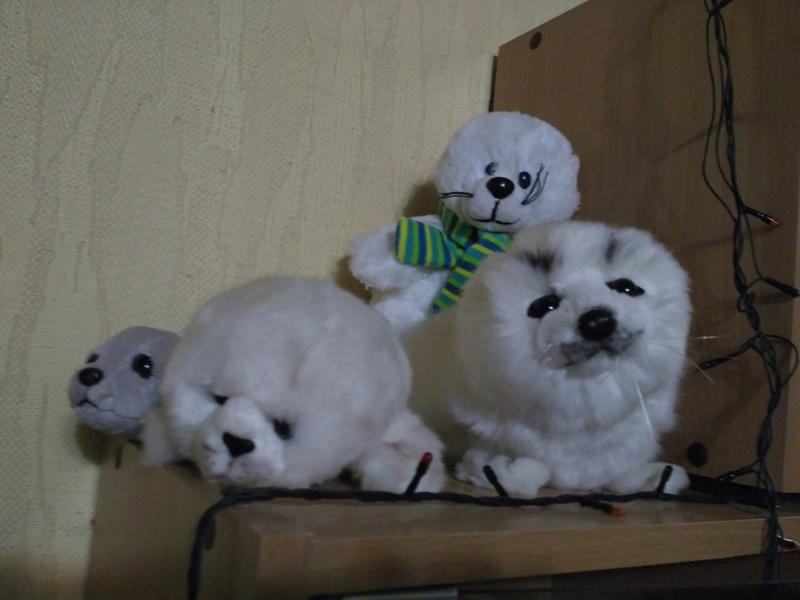 Тут я покажу вам своих тюленей. Ftzl-z10