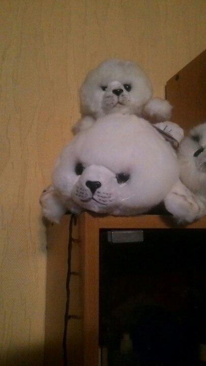 Тут я покажу вам своих тюленей. Nfq-3i10
