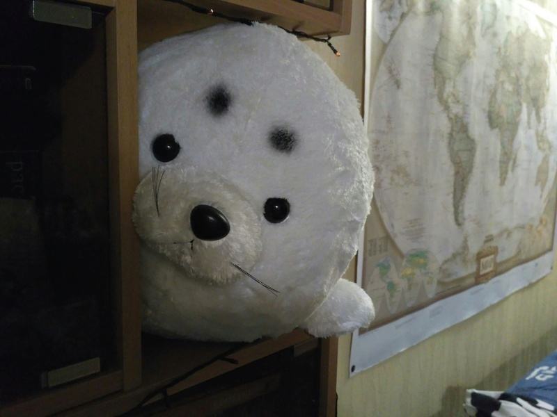 Тут я покажу вам своих тюленей. Pkpflg10