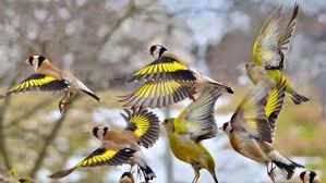 المنتدى العربي لطيور الزينة و الحيوانات الأليفة - البوابة المنتدى 3_210