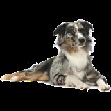 المنتدى العربي لطيور الزينة و الحيوانات الأليفة 4-dog-10