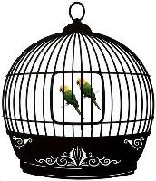 قسم أقفاص و سلاكات و غرف طيور عائلة الببغاوات