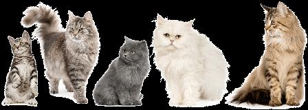 المنتدى العربي لطيور الزينة و الحيوانات الأليفة Caty10
