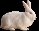 المنتدى العربي لطيور الزينة و الحيوانات الأليفة White_10