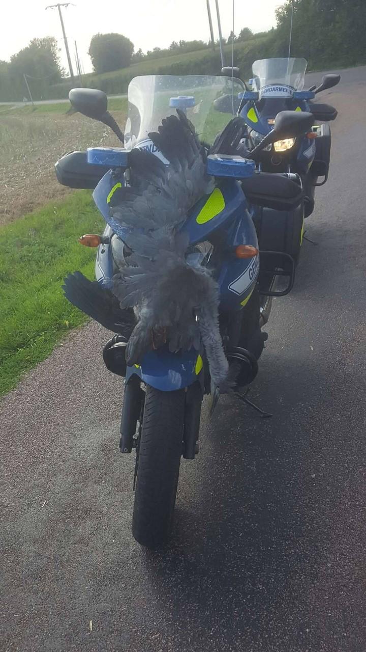 Le gendarme et le héron 20615810