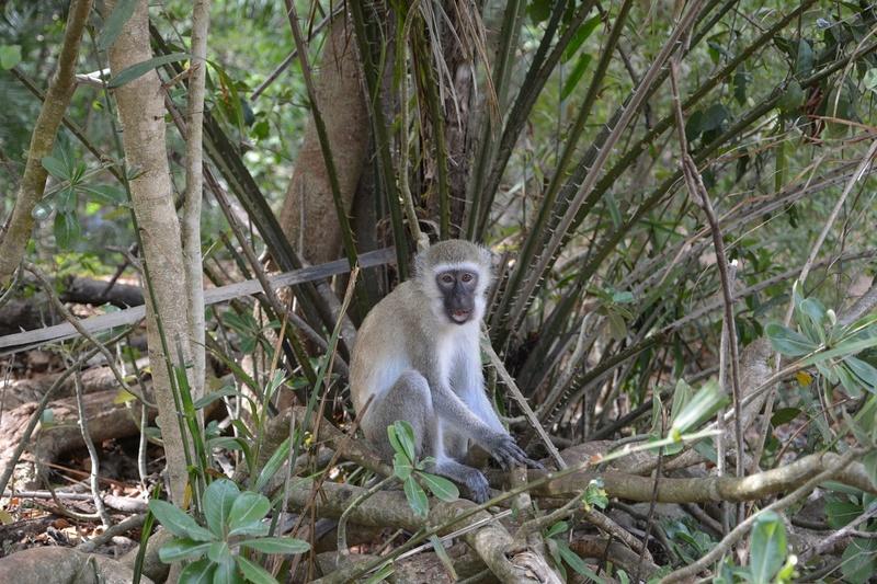 photos du kenya  Dsc_0016