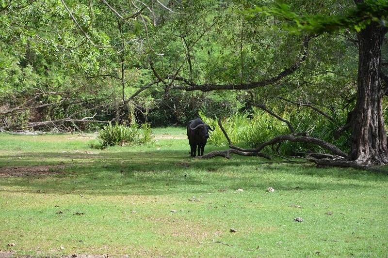 photos du kenya  Dsc_0023