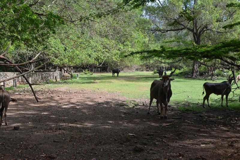 photos du kenya  Dsc_0033
