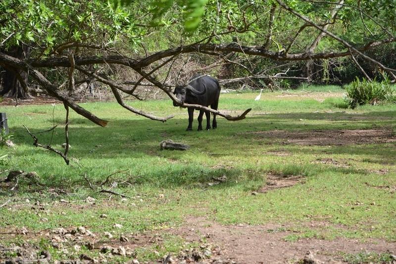 photos du kenya  Dsc_0036