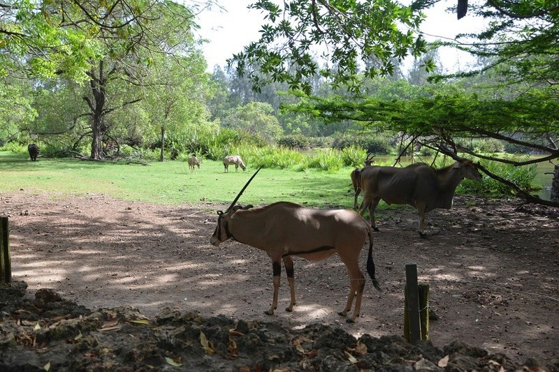 photos du kenya  Dsc_0037