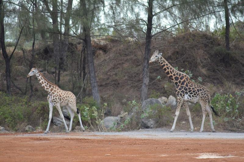 photos du kenya  Dsc_0193