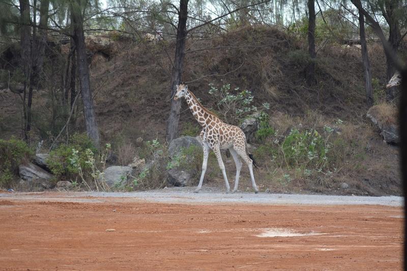 photos du kenya  Dsc_0196