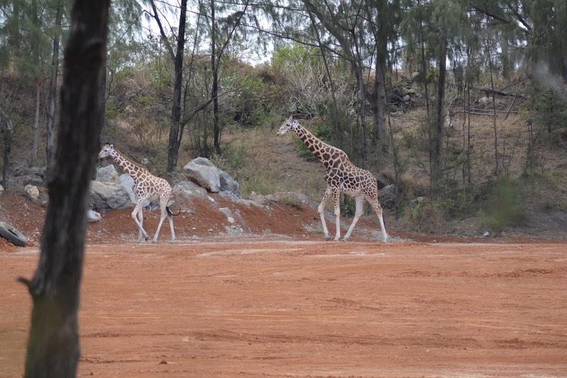 photos du kenya  Dsc_0198