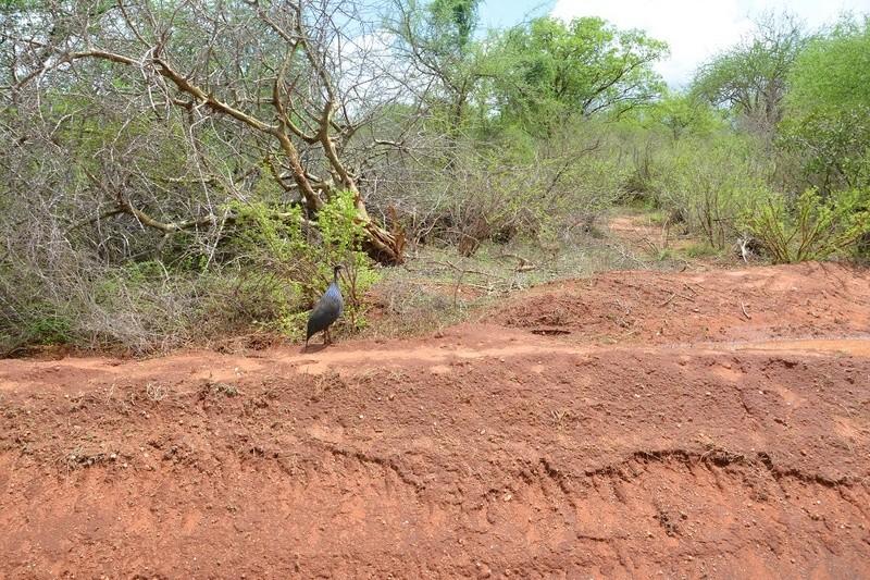 photos du kenya  Dsc_0224