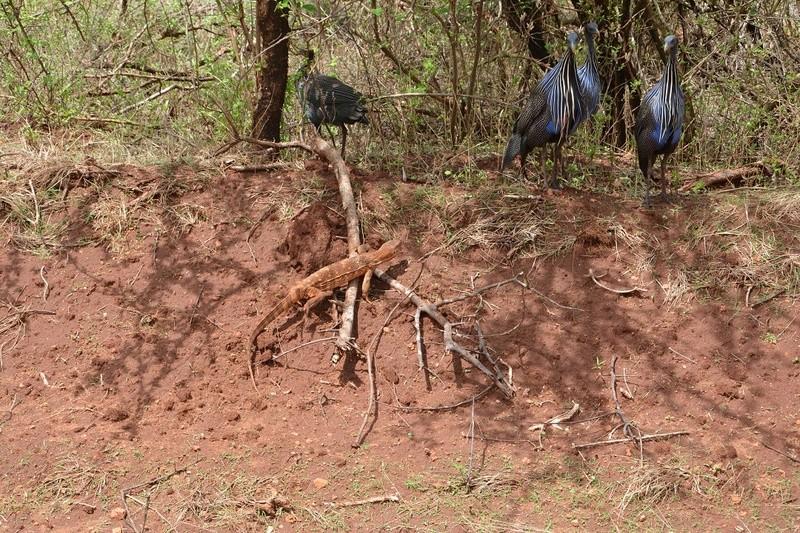 photos du kenya  Dsc_0384