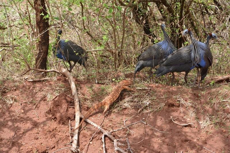 photos du kenya  Dsc_0385