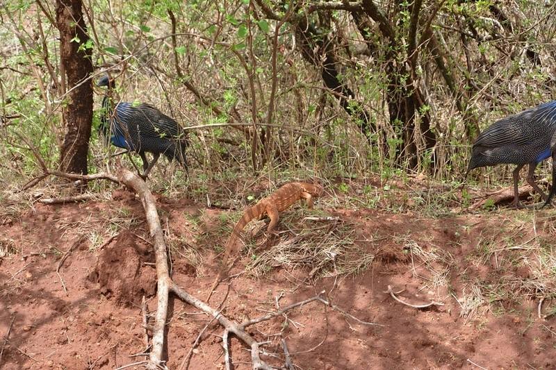 photos du kenya  Dsc_0386