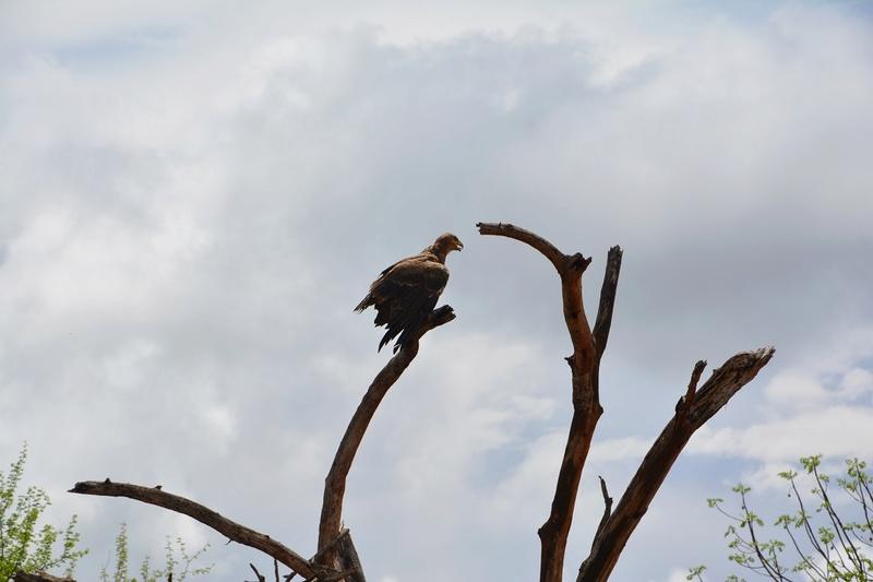 photos du kenya  Dsc_0497