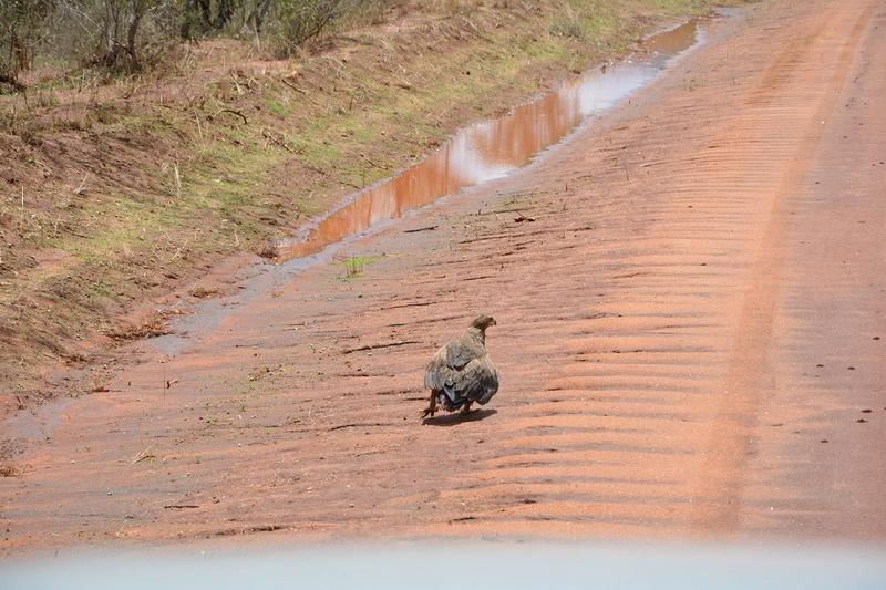 photos du kenya  Dsc_0498