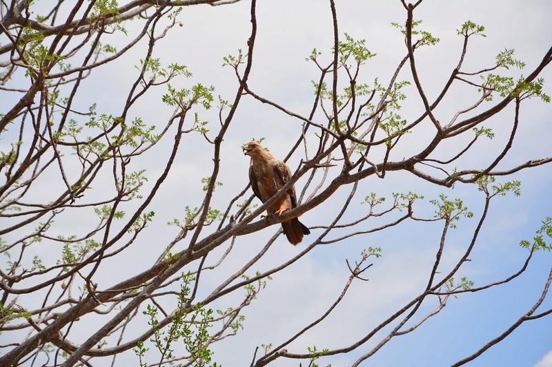 photos du kenya  Dsc_0499