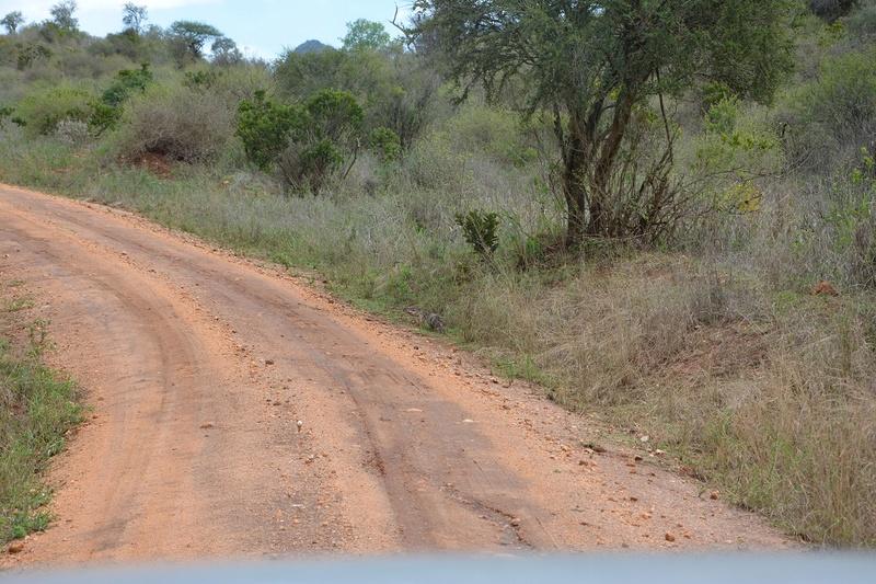 photos du kenya  Dsc_0505