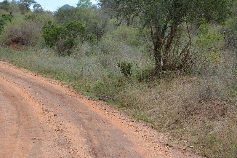 photos du kenya  Dsc_0506
