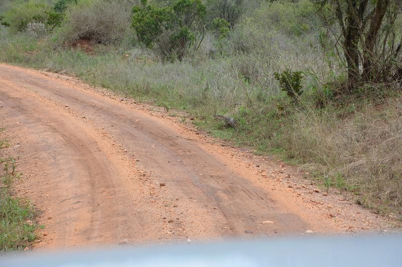 photos du kenya  Dsc_0507