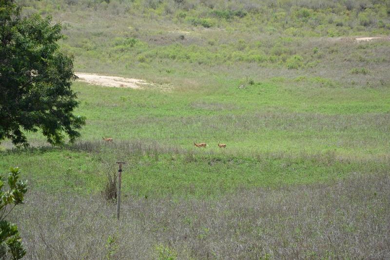 photos du kenya  Dsc_0509