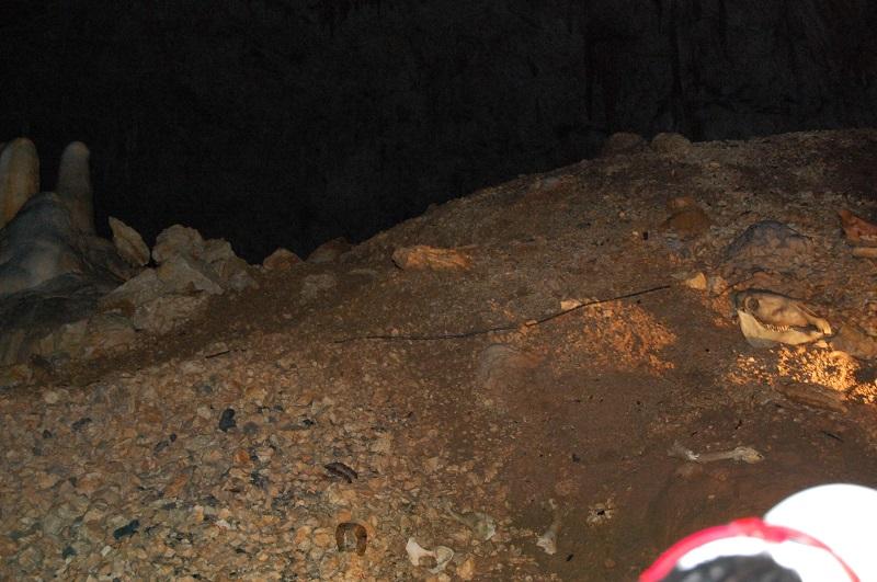 grotte de l'aven d'orgnac Dsc_0515