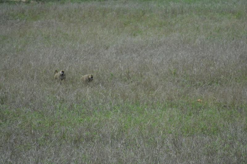 photos du kenya  Dsc_0581