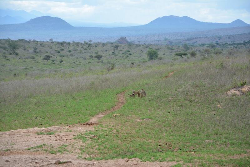 photos du kenya  Dsc_0586
